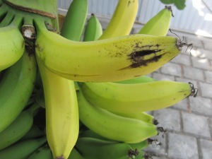 Banana crime bust Mexico