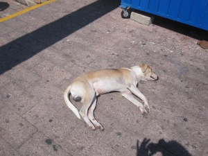 Dead Dog Society of Mexico